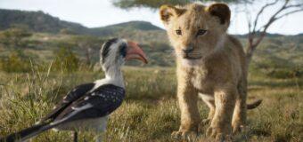 Filmanmeldelse: Løvernes konge – Dovne Disney underholder, men den nye version tilføjer intet nyt